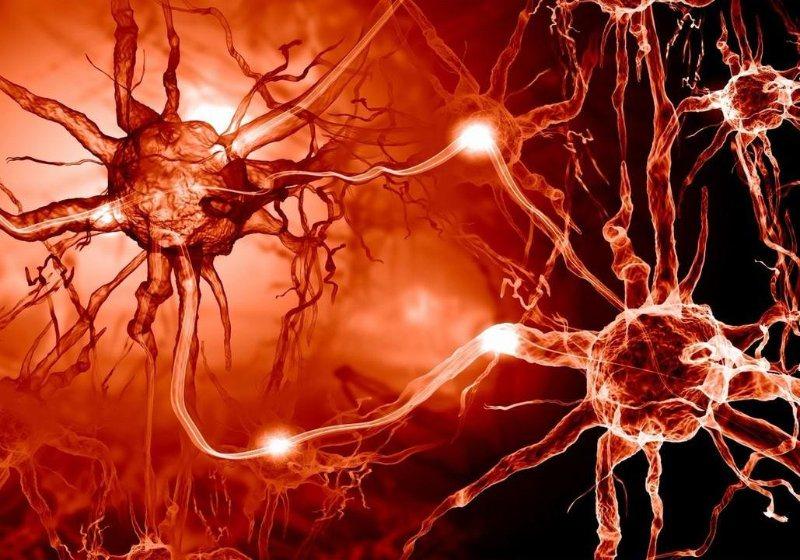 Hệ thần kinh ảnh hưởng đến việc bài tiết mồ hôi